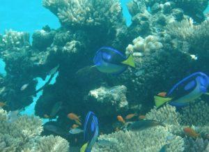 Poissons, coraux, lagon, Mayotte