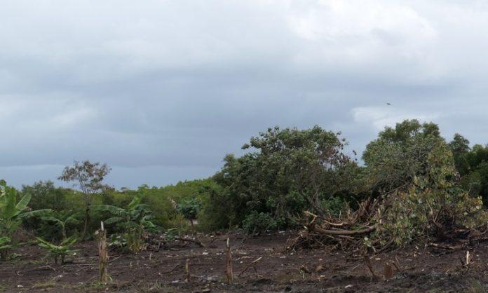 Mangrove, Mayotte, UICN