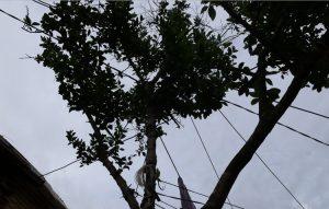 EDM, Mayotte, électrification urbaine