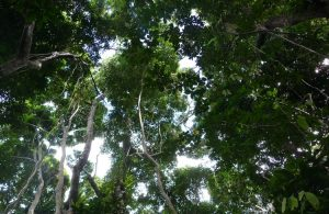 Réserve nationale des forêts, ONF, Mayotte, Lecornu
