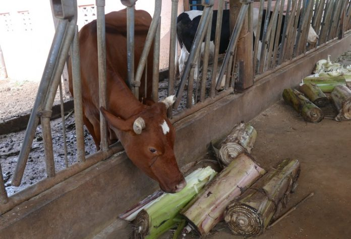 PAC, agriculture, Mayotte