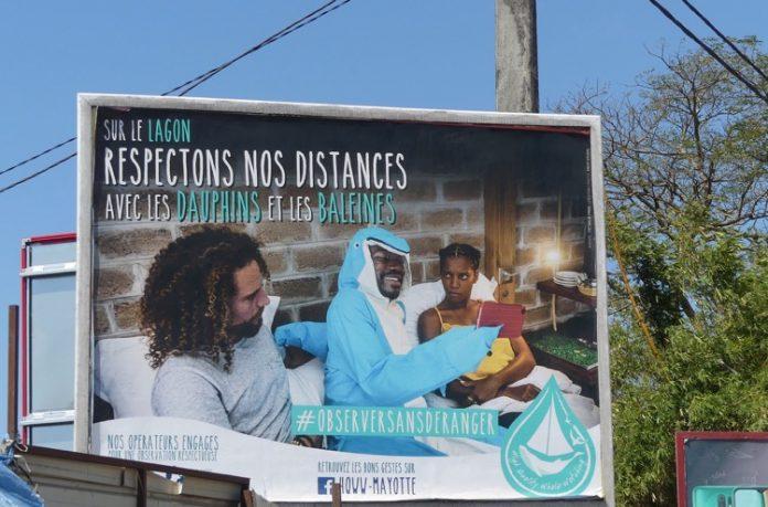 HQWW®, baleines à bosse, Mayotte