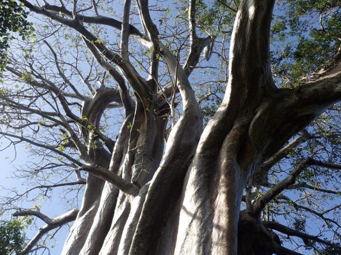 UICN, IFRECOR, Mayotte